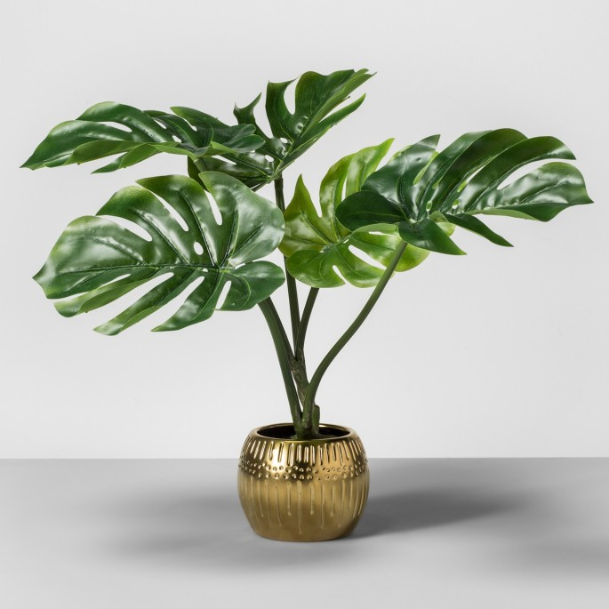 indochic palm leaf plant