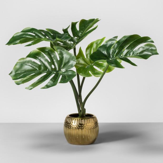 indochic palm leaf plant